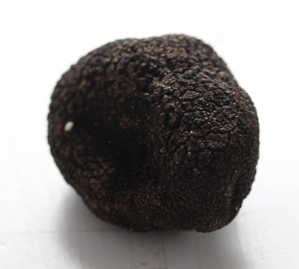 one small black truffle on a white table.