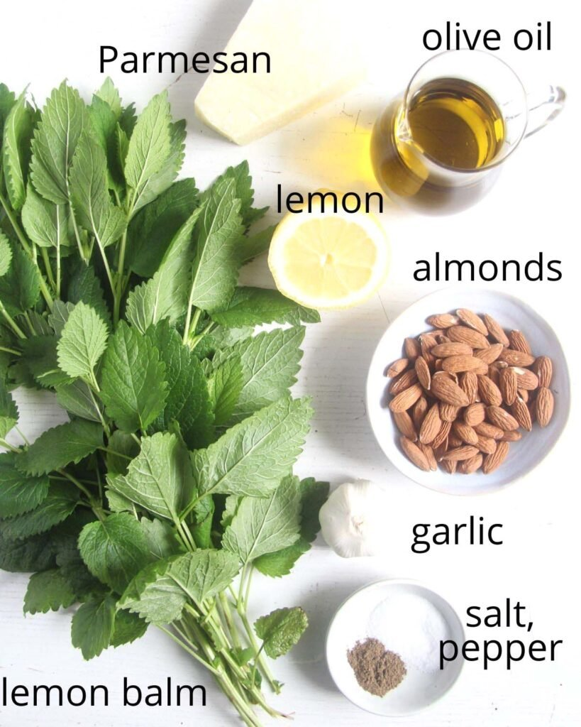 lemon balm, parmesan, oil, lemon, almonds, garlic, salt, pepper arranged on a white table.