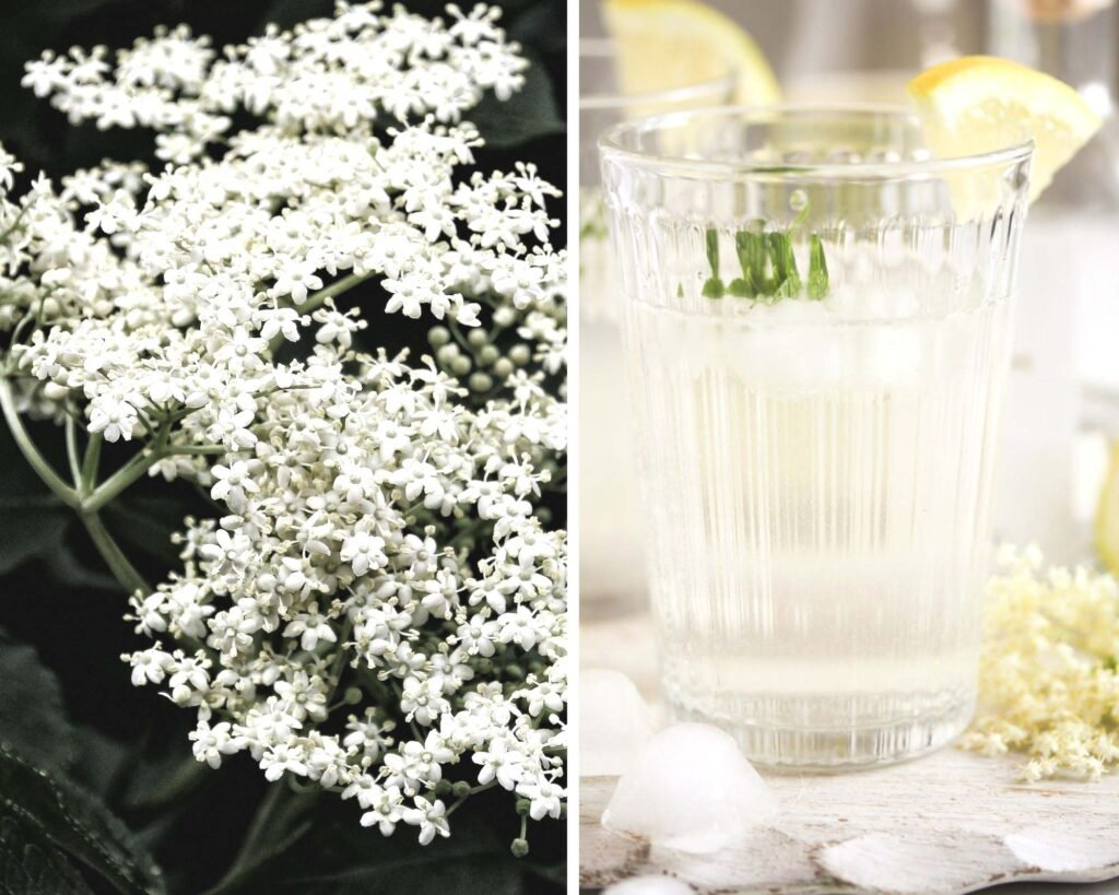 collage of two pictures of elderflowers and a glass of gin.
